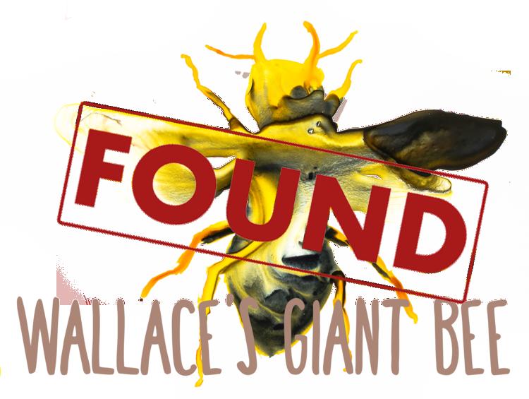 Found Lost Species illustrations